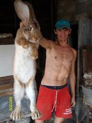 Продам кроликов - гигантов породы