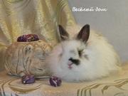 Кролики из