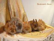Кролики - Цветные карлики