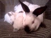 кролики, клетки для кроликов