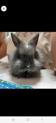Кролик( с принадлежностями)
